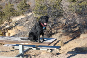 black lab on a picnic table